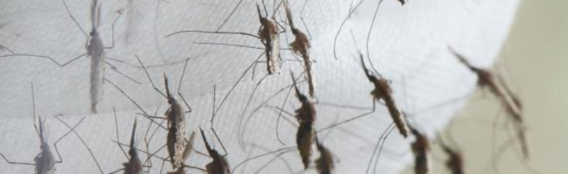 World Health Organization Claims Mosquitoes are the World's Deadliest Animal