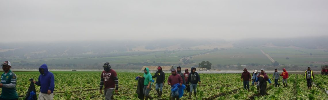 UFW's Farmworker Union Dues Seized to pay off Lawsuit