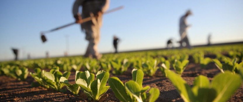 Thanksgiving: A Time for America to  Recommit to Farmers and Farm Workers