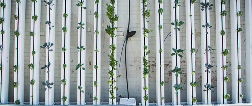 From Vertical Farming, Robotics and Precision Plant Breeding, Progressive California Farmers Continue to Innovate